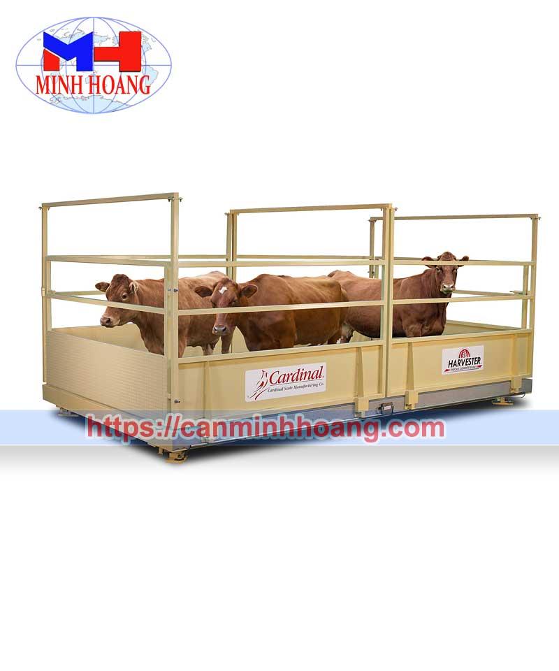 Cân trang trại chăn nuôi
